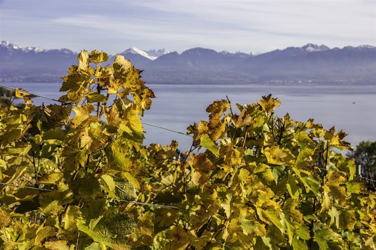 Les Vignes Du Léman - Sophie de Roumanie