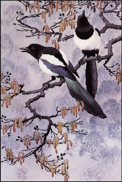 Magpies - Charles Tunnicliffe