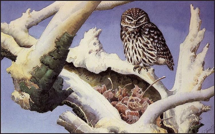 Owl on a Snowy Tree Trunk - Charles Tunnicliffe