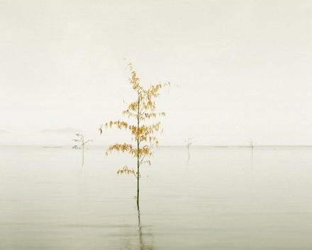 Orange Leaves, Ariake Sea, Japan, 2010 - David Burdeny