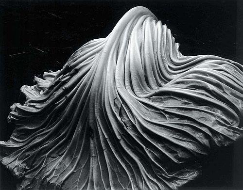 Cabbage Leaf, 1931 - Edward Weston