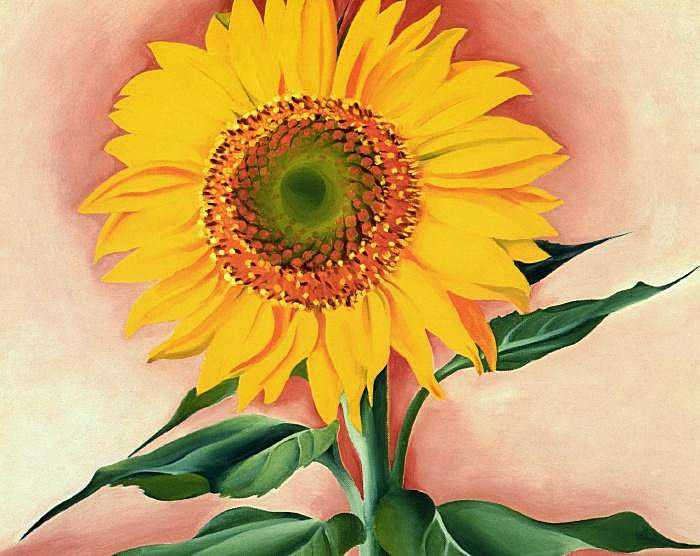A Sunflower from Maggie, 1937 - Georgia O'Keeffe