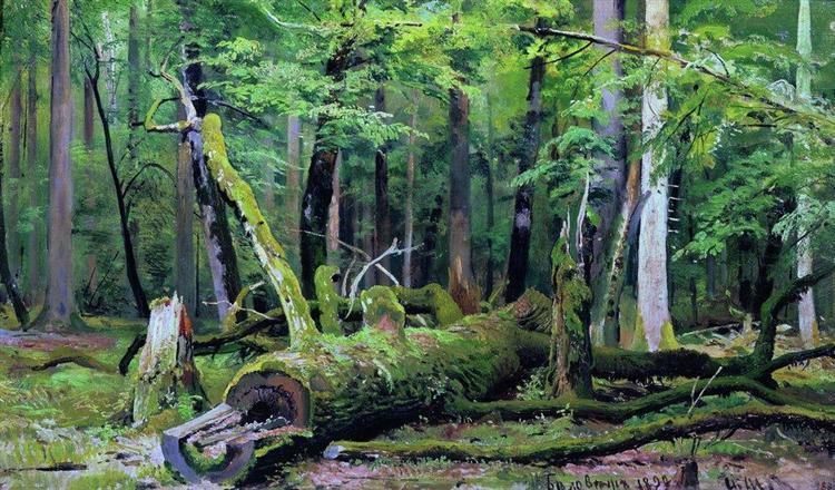 Cut down oak in the Bialowiezka Forest, 1892 - Ivan Shishkin