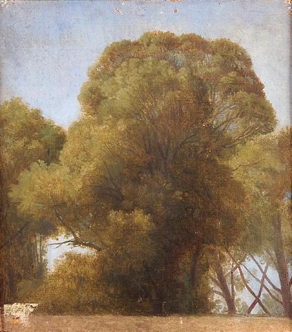Study of trees, 1841 - 1849 - Jean Auguste Dominique Ingres