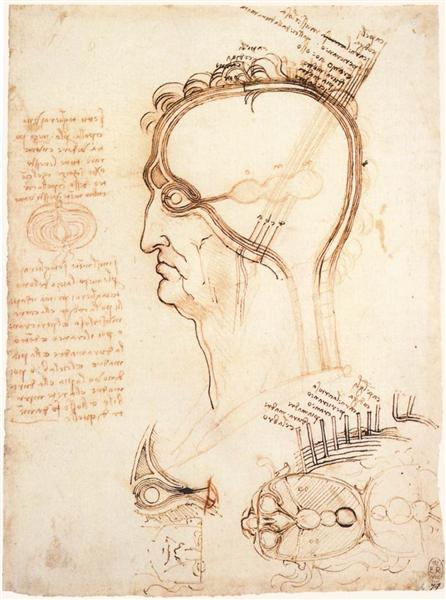 Comparison of scalp skin and onion, 1489 - Leonardo da Vinci