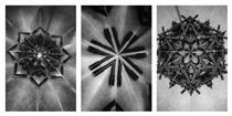Holy Flowers - Mircea Cantor