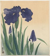Flowering iris - Ohara Koson