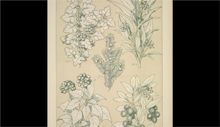 Leaves and Flowers from Nature Ornament no. 7. Hawthorne, Yew, Ivy and Strawberry-tree - Owen Jones