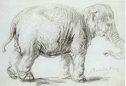 Hansken - Rembrandt